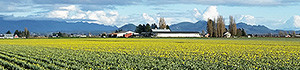 Skagit-Valley-crops-300