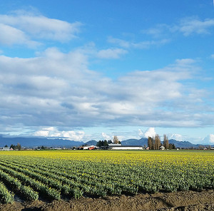Skagit-Valley-crops-500