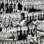 A Korean woman hangs squid to dry in the sun on Ulleung-do in the late 1960s. (Photos courtesy of the Humphrey Leynse Collection/WSU Manuscripts, Archives and Special Collections)