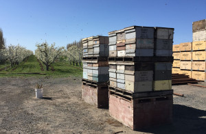 Bee Boxes-web