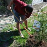 ASWSU volunteer planting tree at Ruby Street Park.