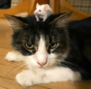 Mouse-&-Cat-web