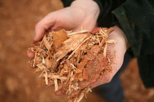 hands holding wood byproducts1 (1)