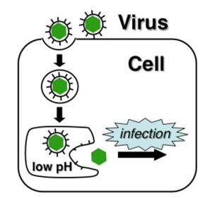 Herpes-diagram-web