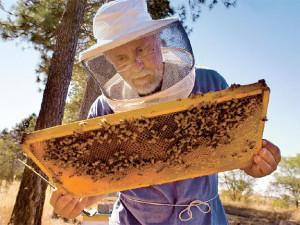 Sheppard-bees-web