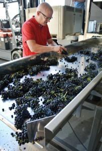 grapes-processed-vert