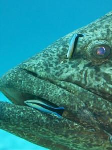 fish-cooperate