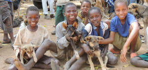 Africa-dog-vaccination-research