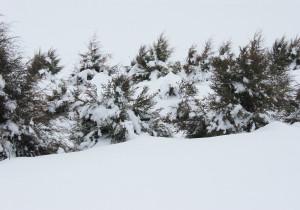 Capturing-snow-web