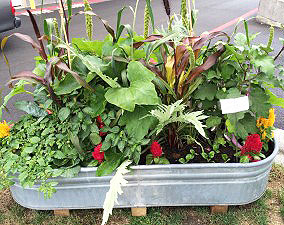 small-space-container-garden