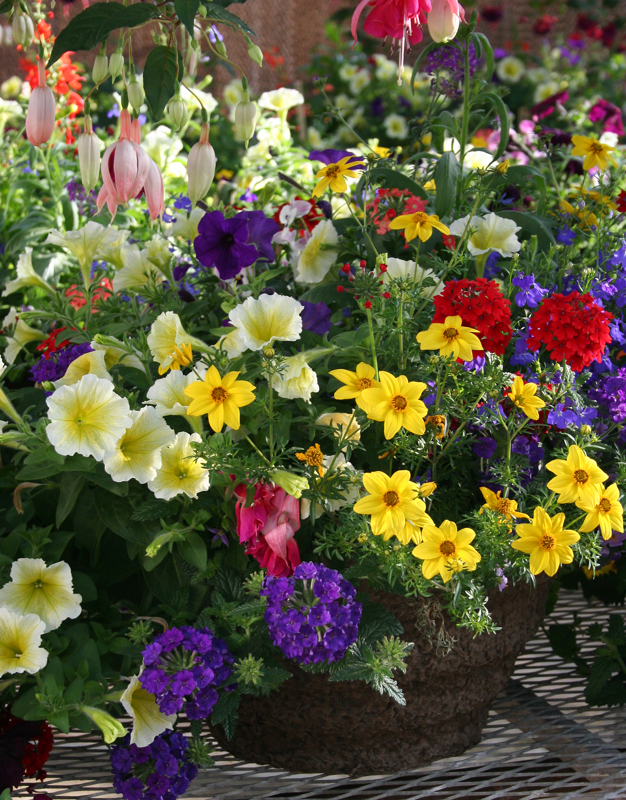 may 6 annual graduation plant sale at greenhouses wsu news washington state university