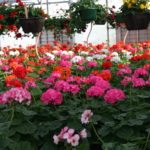 3-plant-sale