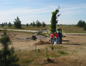 Planting-native-shade-trees