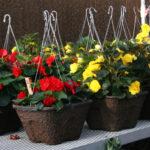 1-plants