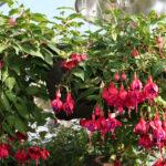 3-plants