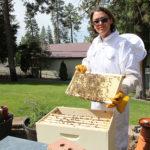 2-Bees-yard