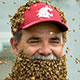 Bernardo-bee-beard