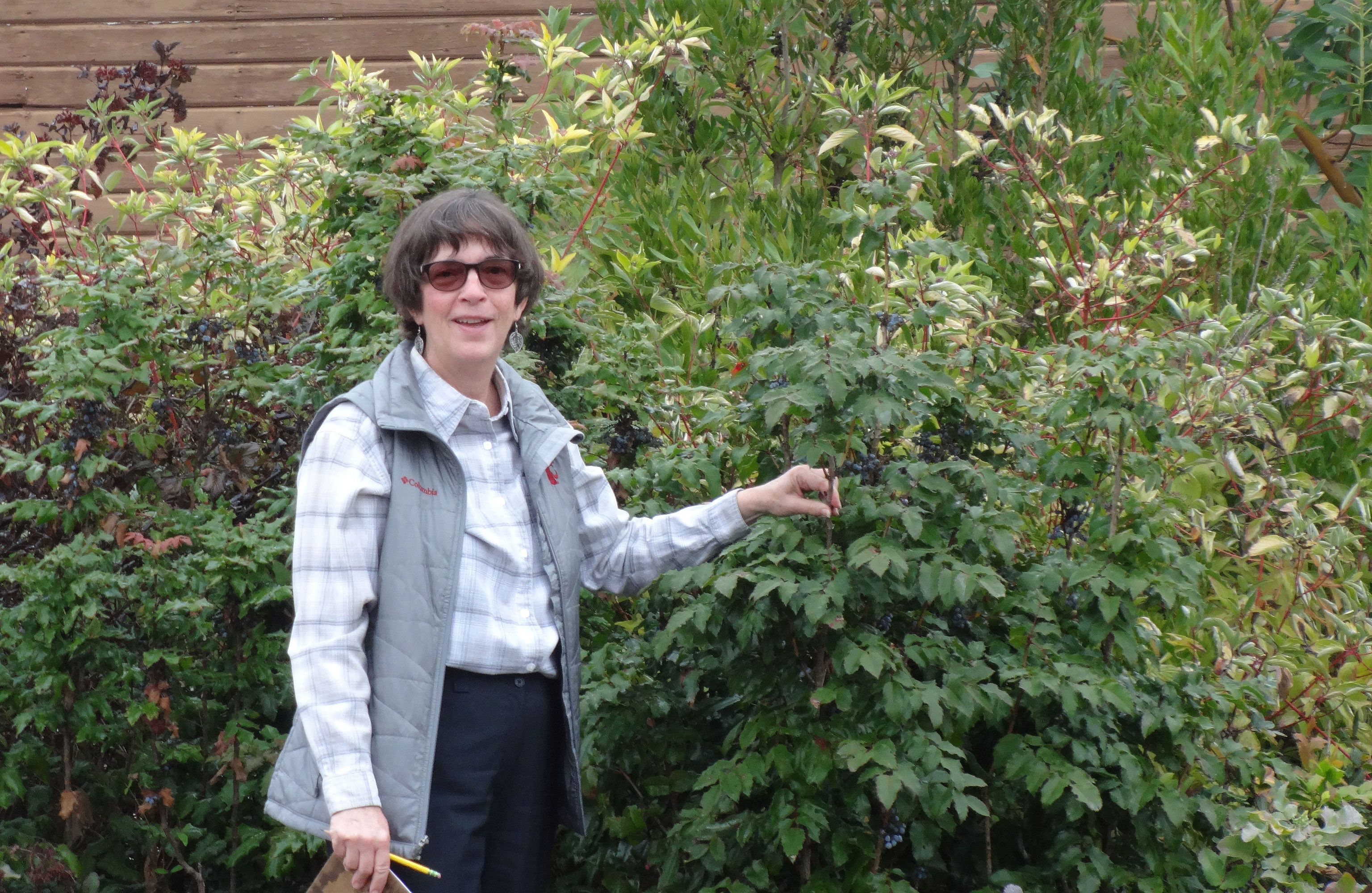 How does your rain garden grow best plants for northwest wsu native plants find use statewide publicscrutiny Images
