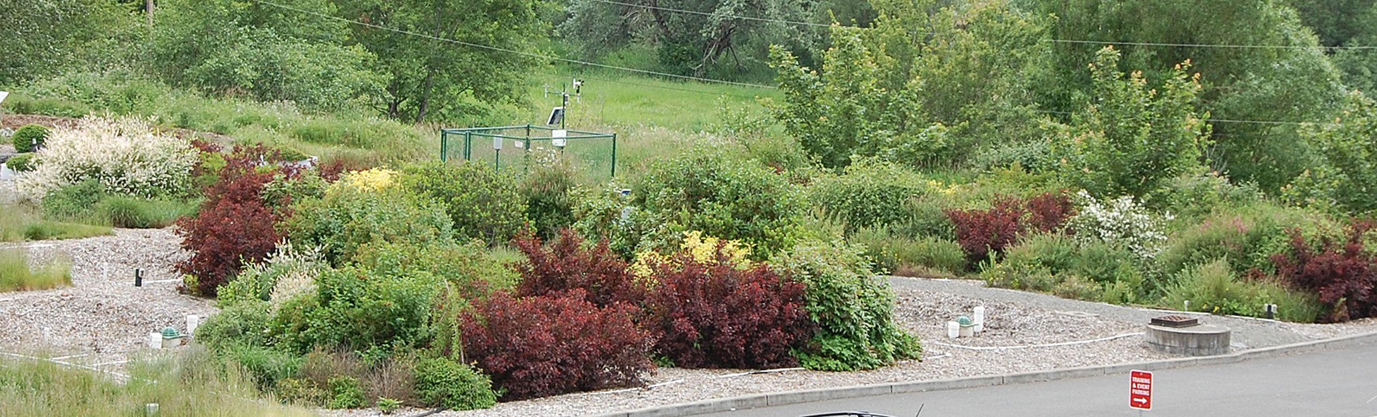 How Does Your Rain Garden Grow Best Plants For Northwest Wsu