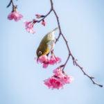 2-Okinawan-Spring-web