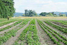 farm-walk