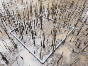mangrove-roots-web