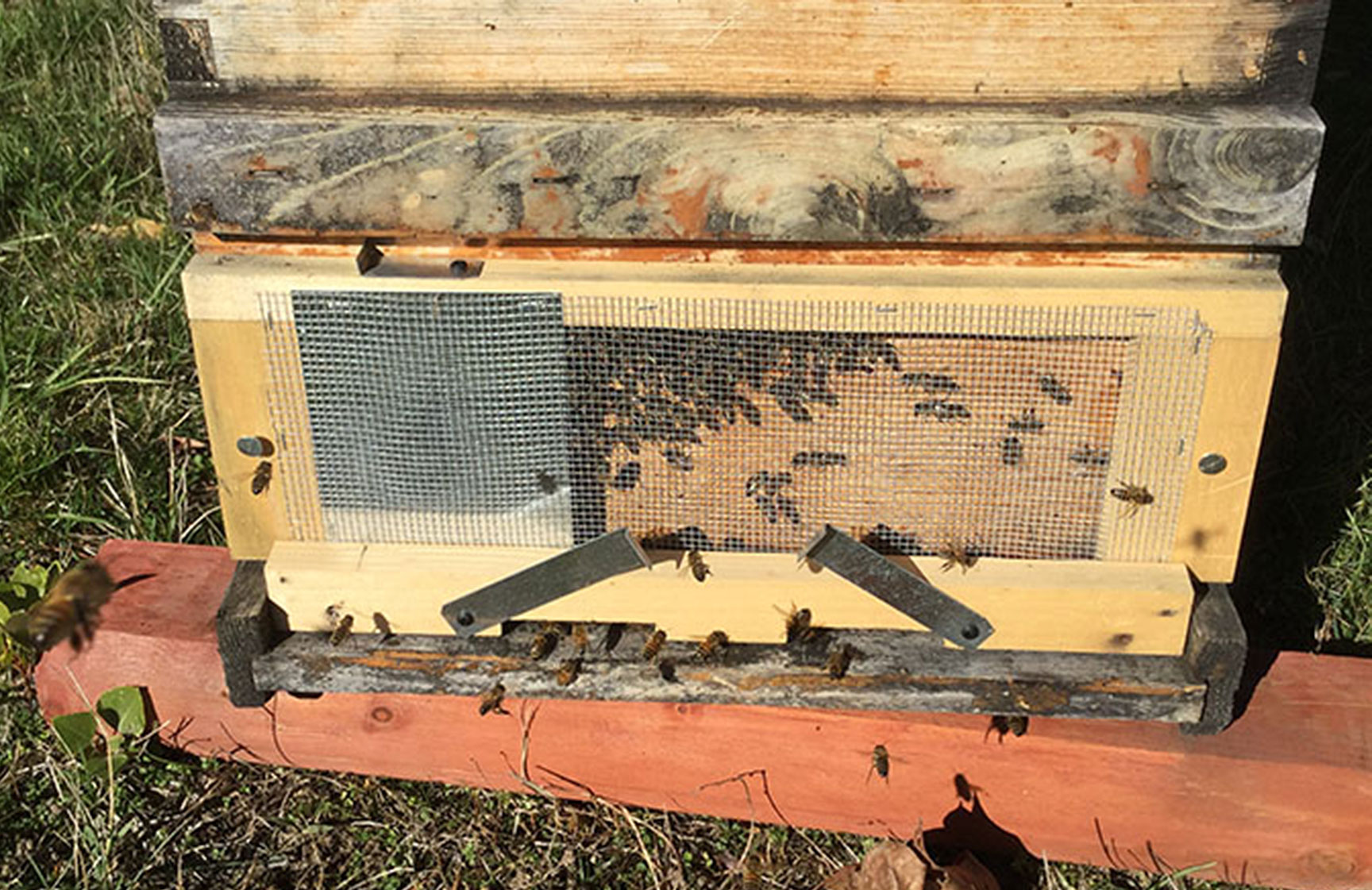 Bee Hive Placement Protect Your Hive from Predators