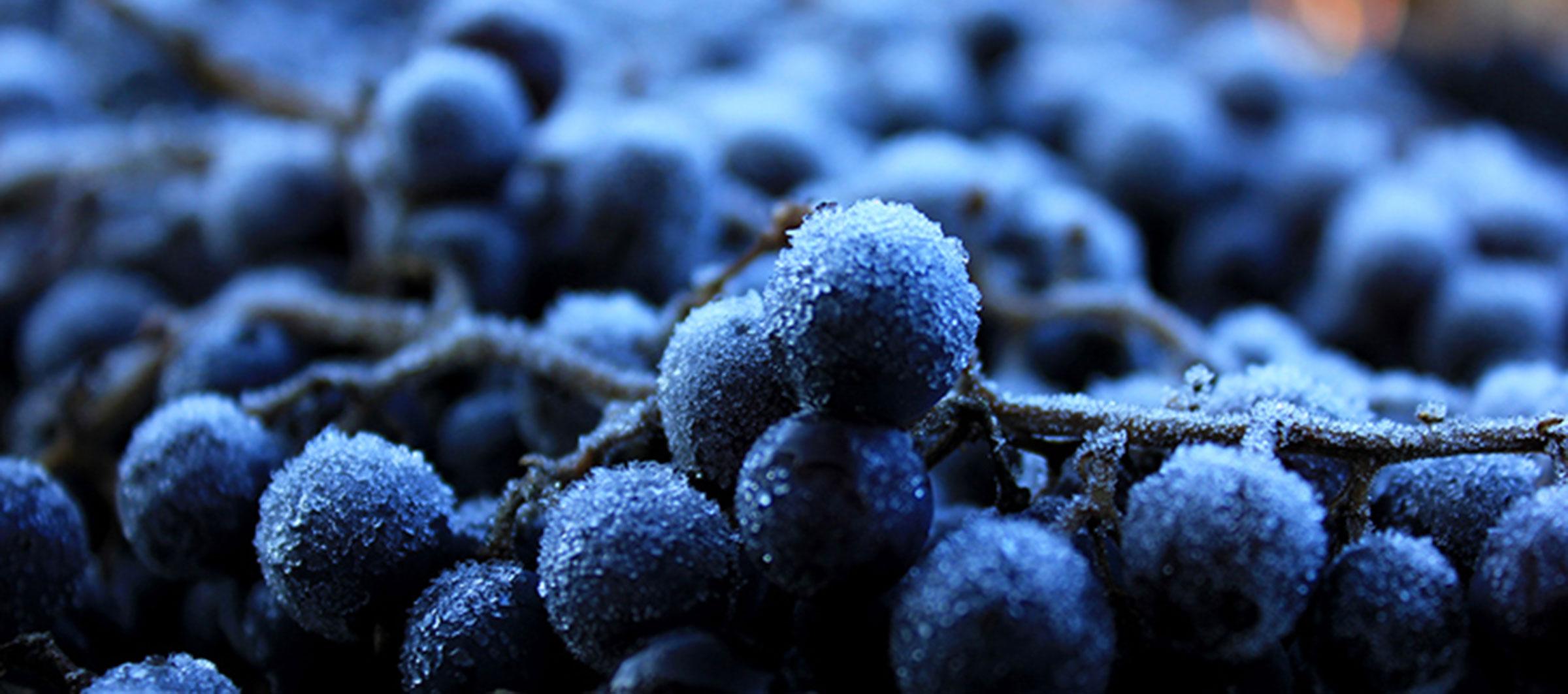 Unseasonable greetings for washington states vineyards wsu wine kristyandbryce Gallery