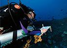 Cori Kane, WSU Vancouver marine biologist
