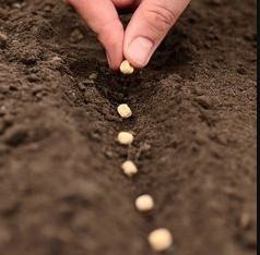 planting seeds - new faculty seed grants