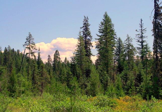 Idaho Natural Resources Foundation
