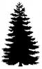 ponderosa_tree silhouette