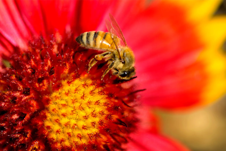 The honey bee is your constant companion.