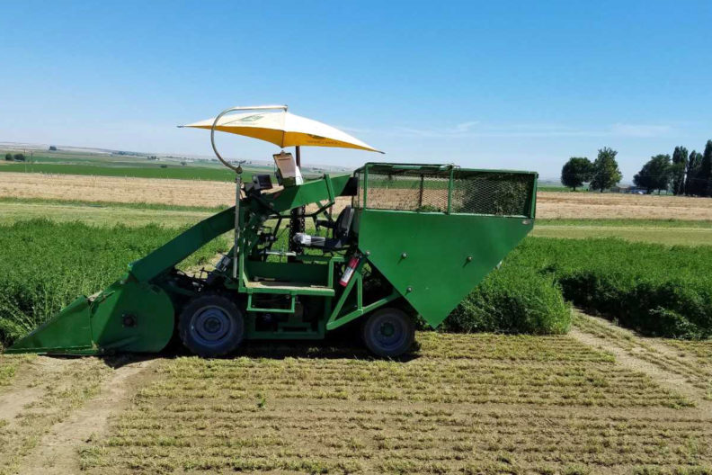 Alfalfa is harvested in the Northwest. WSU Extension scientists are studying genes to help develop more digestible varieties.