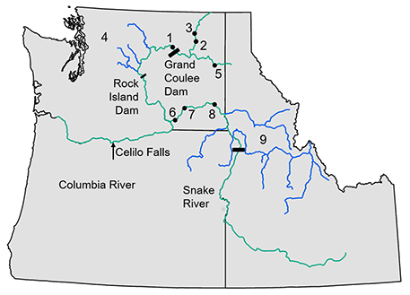Pacific NW Fish sites: Researchers compared ancient and contemporary Chinook salmon DNA from throughout the Columbia Basin. Ancient sample locations for the Columbia River(1 – 3), Snake River (6 – 8), and Spokane (5) sample groups are marked by black dots. Contemporary sample locations for the Columbia (near 4) and Snake (near 9) are indicated with blue lines.