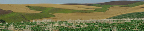 Palouse farm fields and soil