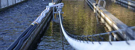Whooshh transports fish up and over a dam in a matter of seconds via a seamless pneumatic tube system.