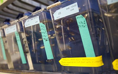 Zebrafish monitored in varieties of stormwater samples.