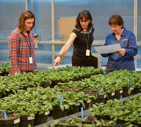 WSU Plant Pathologist Lindsey du Toit, center, with graduate student Shannon Carmody, left, and Kathy Lindbloom, a Sakata Seed America representative, discuss results of soil testing for risk of Fusarium wilt (Photo by Kim Binczewski).