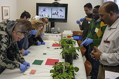 WSU professor and virologist Naidu Rayapati, right, and two of his graduate students show Spark participants how to conduct a test for a specific virus on tomato plants. The students didn't know if their samples contained the virus or not until they got their test results after only a few minutes.