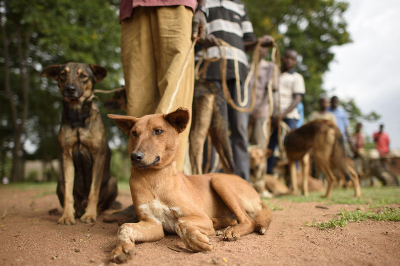Rabies Vaccination Day events draw dog owners from nearby Kenyan villages.