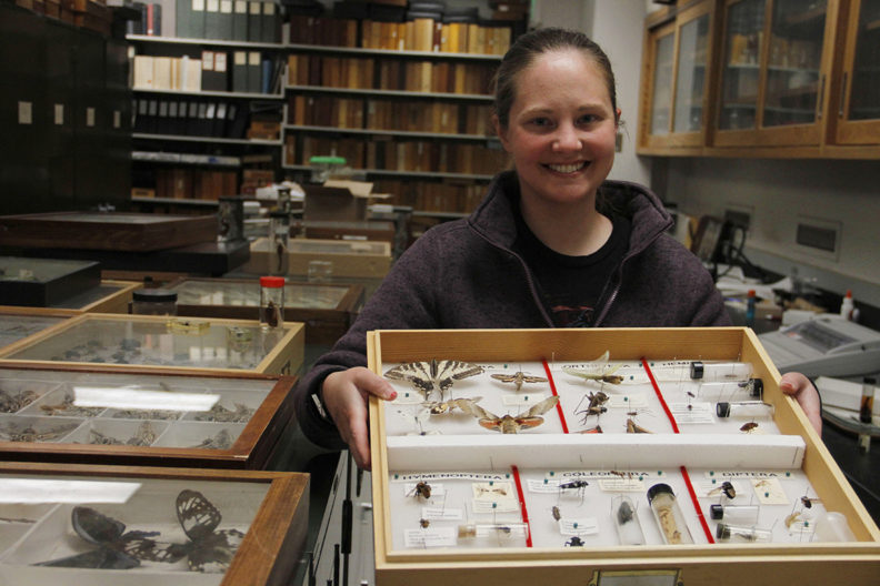 • The $1.4 million estate gift helps fund student researchers, like WSU Entomology doctoral student Megan Asche, here holding insect specimen donations from the Hyde family. Photo by Seth Truscott, CAHNRS.