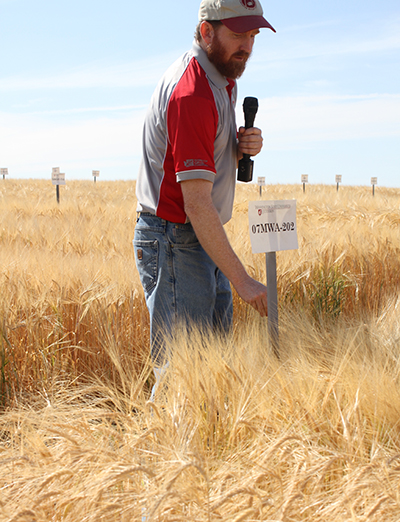 Breeder Kevin Murphy tours a test plot of barley at WSU's Spillman Agronomy Farm (Seth Truscott-WSU Photo).