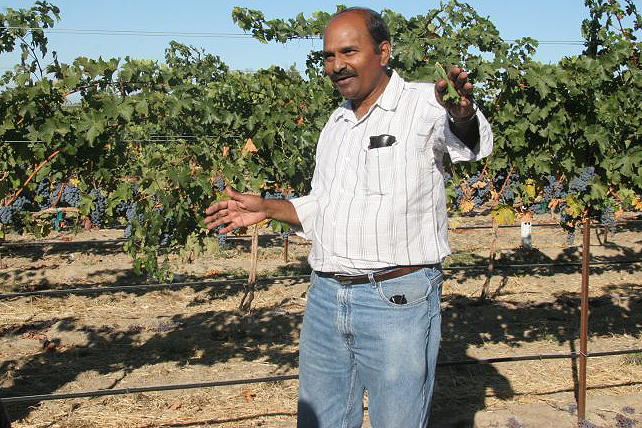 Naidu Rayapati gives a talk to growers in a vineyard near Prosser.
