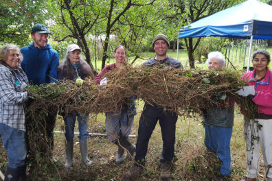 Forest owners harvest bounty of invasive weeds.