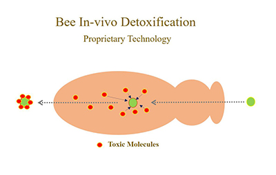 diagram of bee detoxification process