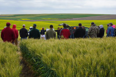 A speaker talking to people gathered in a wheat field.