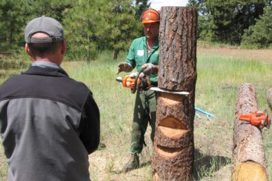 man with chain saw cutting tree trunk