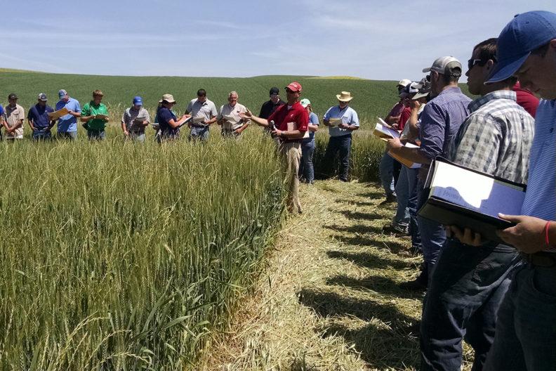 man speaks to gathering of people in wheat field.