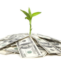 Concept photo of a plant and a lot of Hundred dollar bill isolated on white background